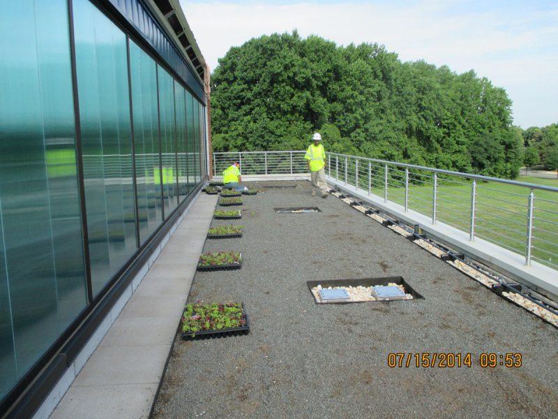 Green Roof Plantings 6